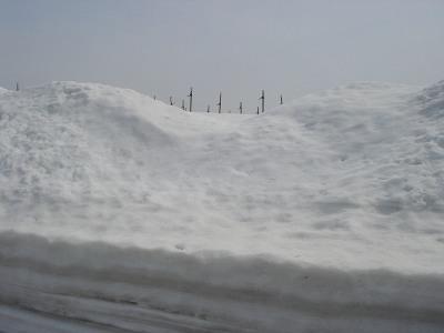 山ぶどうは雪の中です_f0120697_1175120.jpg