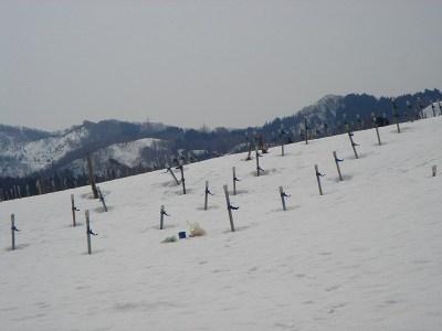 山ぶどうは雪の中です_f0120697_1194835.jpg