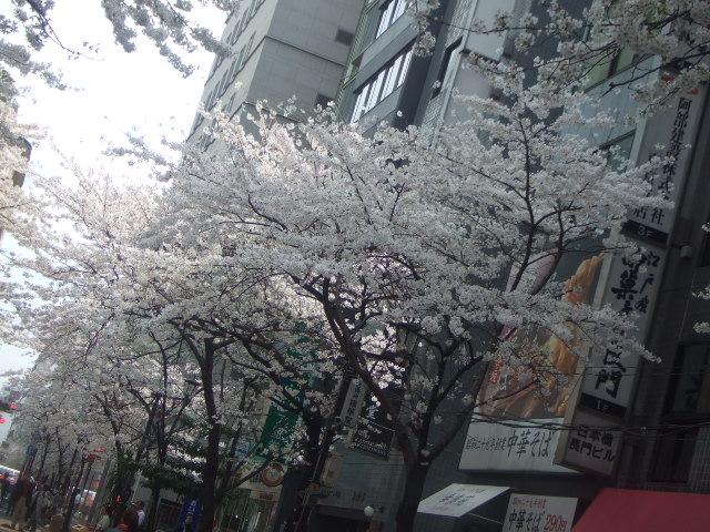 日本橋さくら通り_f0076001_21541551.jpg