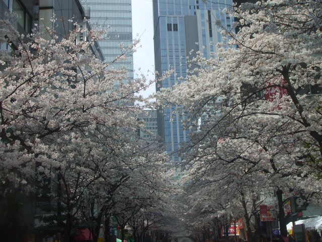 日本橋さくら通り_f0076001_21544060.jpg