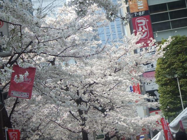 日本橋さくら通り_f0076001_21551127.jpg