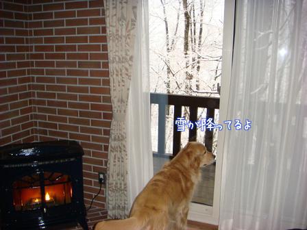 また雪だあ~_f0064906_20105192.jpg
