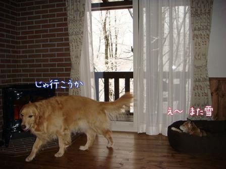 また雪だあ~_f0064906_20122473.jpg