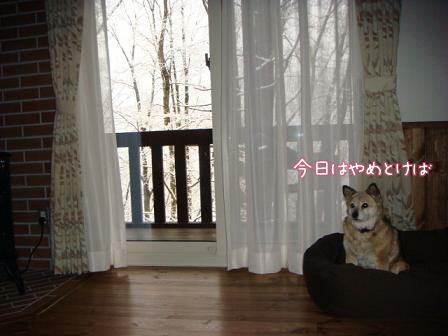 また雪だあ~_f0064906_2013034.jpg