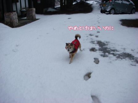 また雪だあ~_f0064906_2014519.jpg