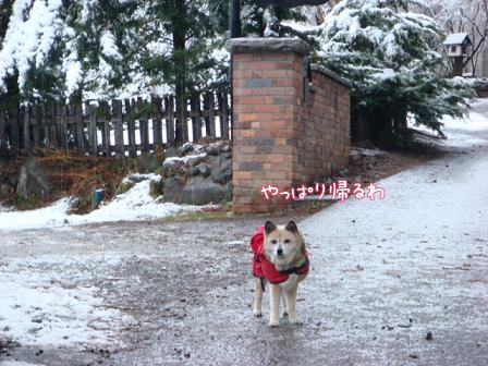 また雪だあ~_f0064906_20145731.jpg
