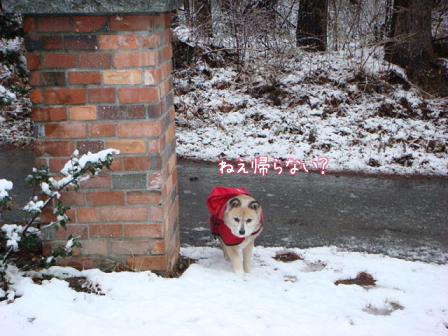 また雪だあ~_f0064906_2016184.jpg