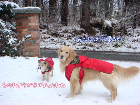 また雪だあ~_f0064906_20305773.jpg