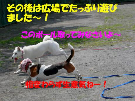 f0121712_14391396.jpg