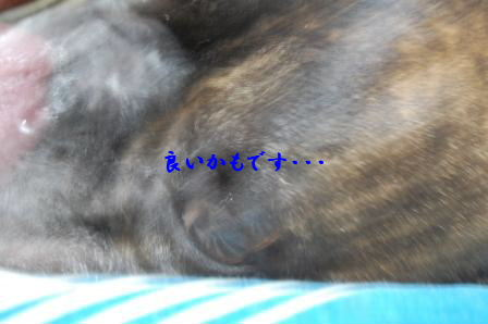 c0130324_23403438.jpg