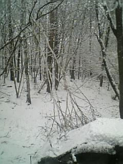 春の雪_f0148927_16553444.jpg
