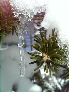春の雪_f0148927_16564179.jpg
