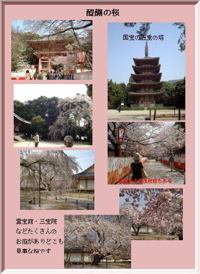 京阪神の桜ポイント_a0084343_10385355.jpg