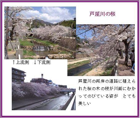 京阪神の桜ポイント_a0084343_9525313.jpg