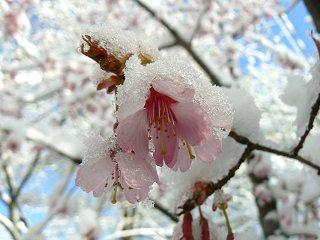 夜桜ウォーク・小淵沢の朝は雪_f0019247_10433479.jpg