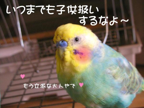f0132055_9223747.jpg
