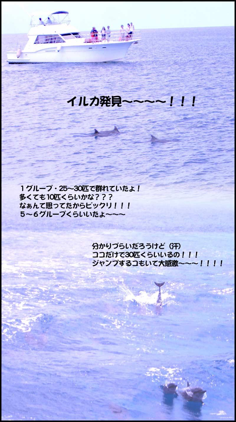 グァム→3/20☆イルカ〜〜〜〜!!!!!_f0119369_14302544.jpg