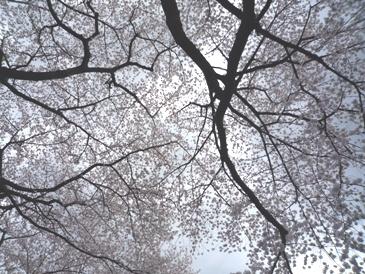 お花見_e0122770_13391883.jpg