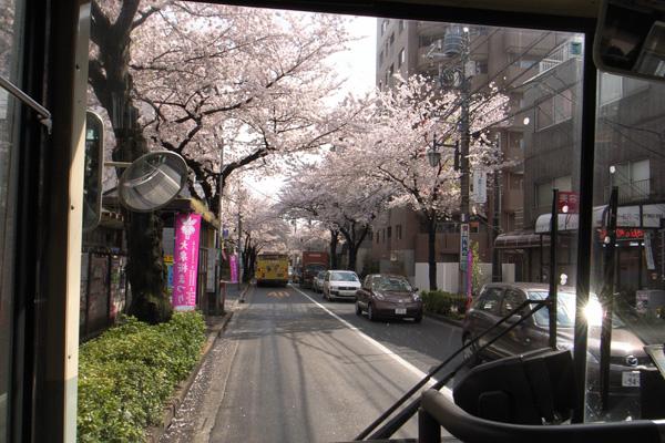 桜並木をバスがゆく_d0123171_16361482.jpg