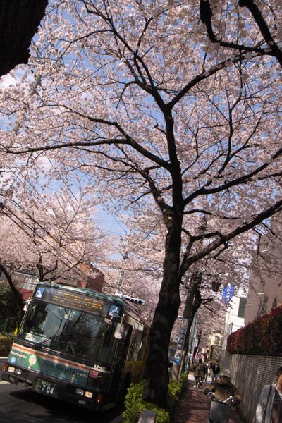 桜並木をバスがゆく_d0123171_16362197.jpg