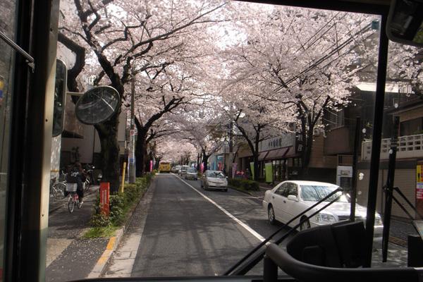 桜並木をバスがゆく_d0123171_1636578.jpg