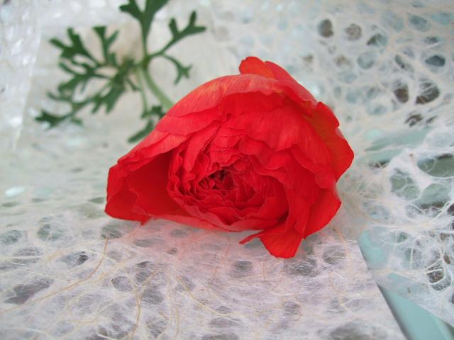 オークリーフ(先生へ贈る花束)_f0049672_13312160.jpg