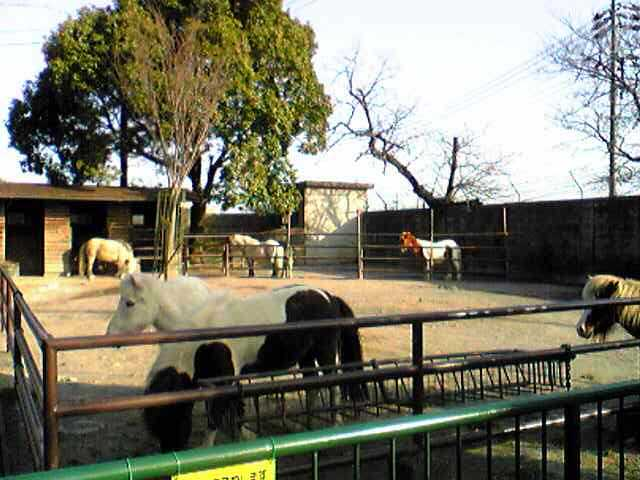 Tokuyama Zoo in YAMAGUCHI, とくやま動物園(山口県)_e0142585_145145.jpg