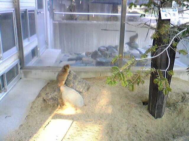 Tokuyama Zoo in YAMAGUCHI, とくやま動物園(山口県)_e0142585_1453629.jpg
