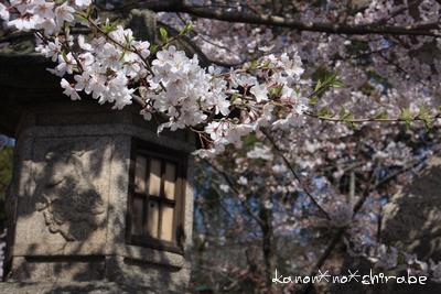 奈良・京都桜旅行『奈良 氷室神社編』_d0148187_21242613.jpg