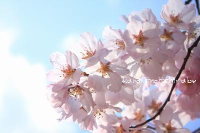 奈良・京都桜旅行『奈良 氷室神社編』_d0148187_21252340.jpg