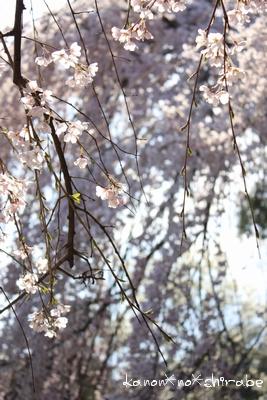奈良・京都桜旅行『奈良 氷室神社編』_d0148187_21254028.jpg