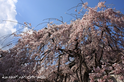 奈良・京都桜旅行『奈良 氷室神社編』_d0148187_2125532.jpg