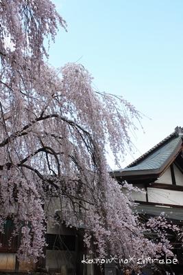 奈良・京都桜旅行『奈良 氷室神社編』_d0148187_21264786.jpg