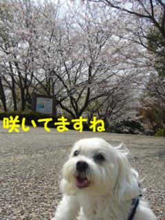 f0145192_15153689.jpg