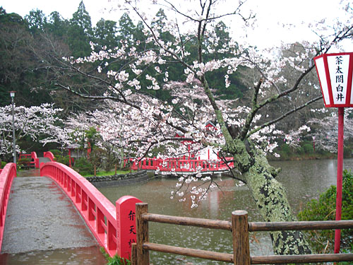雨の茂原公園_b0114798_10315940.jpg