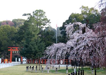 上賀茂神社_e0048413_2312223.jpg