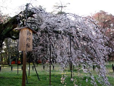 上賀茂神社_e0048413_23122352.jpg