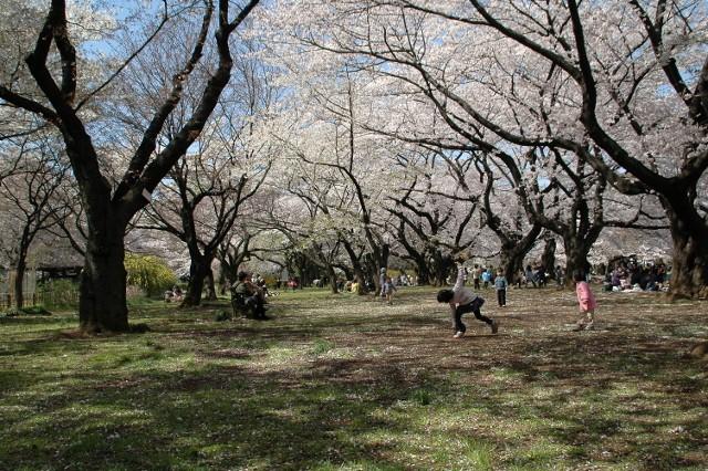 小石川植物園 春の花_f0012718_23263789.jpg