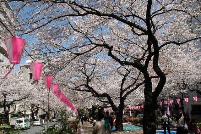 小石川植物園 春の花_f0012718_23363137.jpg