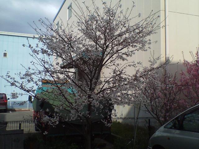 4月1日になりました。_e0045139_9284860.jpg
