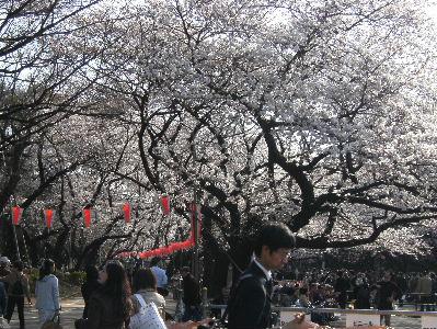 上野、桜 美術館 動物園_f0082141_0175725.jpg