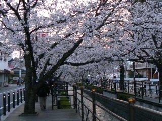 満開の夜桜ウォーク_f0019247_116239.jpg