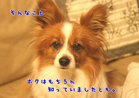 d0013149_0353136.jpg