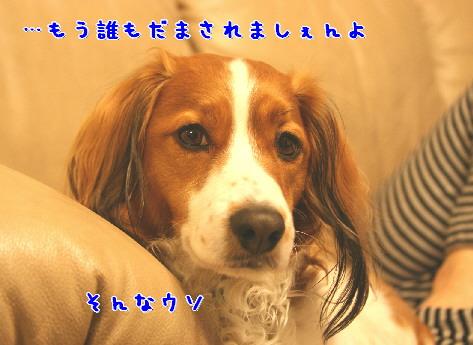 d0013149_16068.jpg