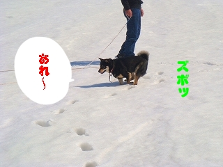 黒柴ふじ on snow field_d0101070_14271440.jpg
