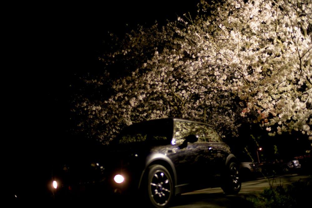 夜桜2_c0150383_222774.jpg