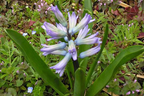 庭先で_c0121993_20234034.jpg