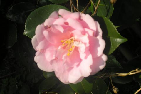 庭先で_c0121993_2024612.jpg