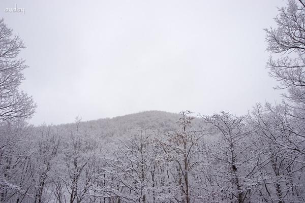 スキーにする? 釣りにする? 花見も良いけど雪見もねっ。_c0048494_11283648.jpg