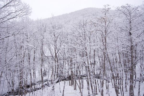 スキーにする? 釣りにする? 花見も良いけど雪見もねっ。_c0048494_11294185.jpg